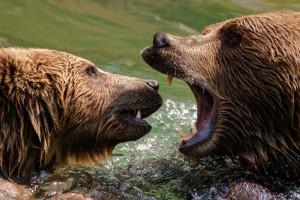 Surviving a Bear Market Encounter in the Wild