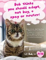Lil Bub to Promote Animal Adoption as PETA's New Spokescat