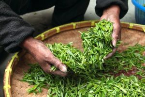 Investing in Tea industry