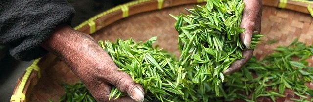 Pros and Cons of Investing in the Tea Industry